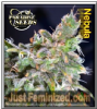 Paradise Nebula Female 5 Marijuana Seeds